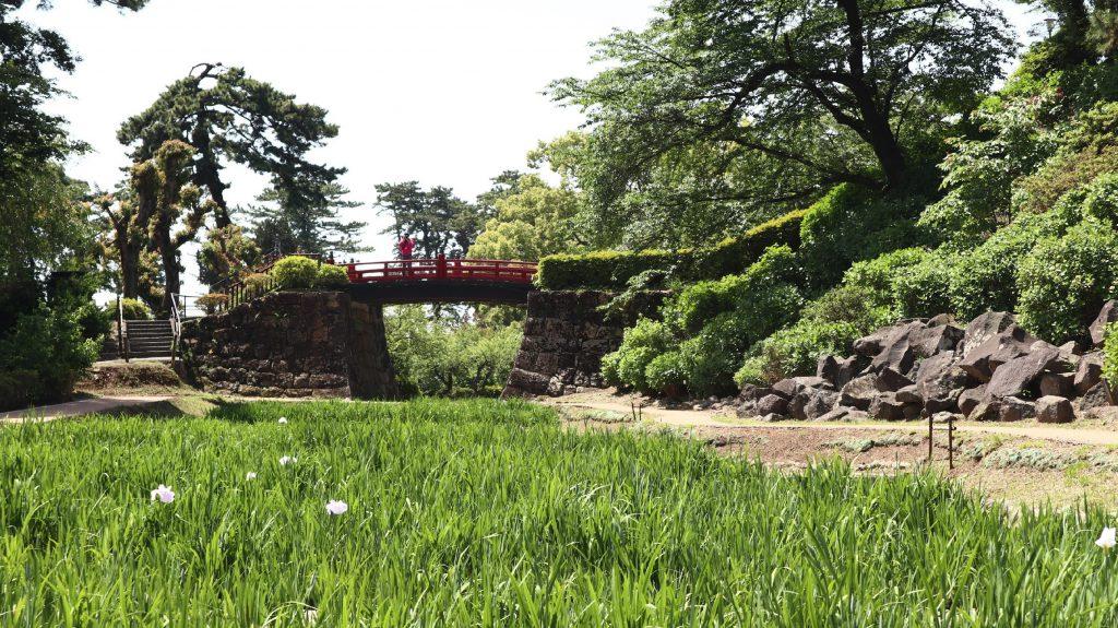 小田原城紫陽花花しょうぶまつり
