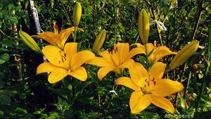 心癒される庭の花
