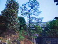 造園写真3